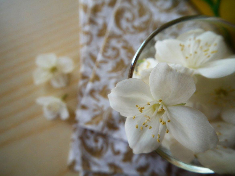 flower-201254_1920