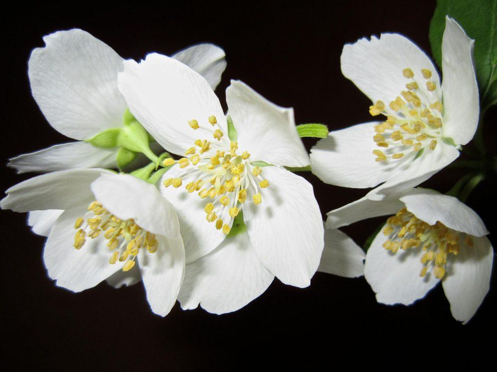 flower-363278_1920
